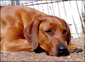 Pleasantview Dog Kennel